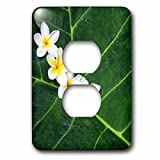 3dRose LSP_259261_6 USA, Hawaii, Maui, Plumeria in Pattern Plug Outlet Cover