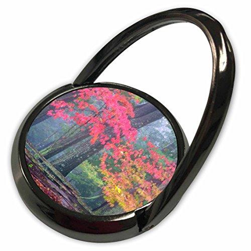 3dRose Danita Delimont - Autumn - USA Pennsylvania, Valley Forge, Split-rail, Autumn - US39 BJA0104 - Jaynes Gallery - Phone Ring (phr_146438_1) (Valley Pennsylvania)