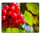 MSD Mousepad IMAGE 33609669 Guelder rose Viburnum opulus ripe red fruits