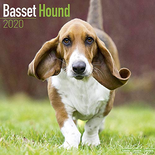 Basset Hound Calendar 2020 - Dog Breed Calendar - Wall Calendar 2019-2020