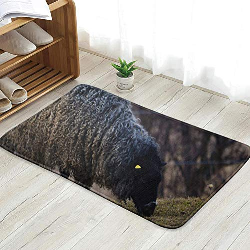 X-Large Gotland Sheep On Meadow Typical Swedish Animals Wildlife Animal Personalized Custom Doormats Indoor/Outdoor Doormat Door Mats Non Slip Rubber Kitchen Rugs 23.6 X 15.8 Inch