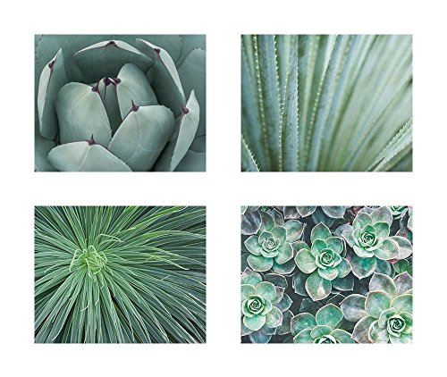 Abstract Green Floral Wall Art, Botanical Flower Decor, Set of 4 8x10 Matted Photography Prints 'Wall of Succulents' (California Photograph Framed)
