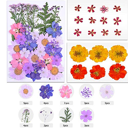 Yakuin 53 PCS Real Dried Pressed Flowers Leaves Petals Colorful Daisies for DIY Candle Resin Jewelry Nail Pendant Crafts Making Art Floral Decors