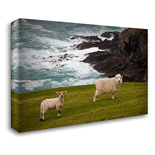 Domestic Sheep and Lamb Near Cliff Edge, Stony Bay, Banks Peninsula, Canterbury, New Zealand 40x28 Gallery Wrapped Stretched Canvas Art by Monteath, Colin