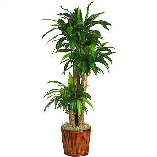Nearly Natural 62'' Dracena w/Basket Silk Plant (Real Touch) by Nearly Natural