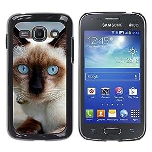 YiPhone /// Prima de resorte delgada de la cubierta del caso de Shell Armor - Siamese Cat Blue Eyes Pet - Samsung Galaxy Ace 3 GT-S7270 GT-S7275 GT-S7272