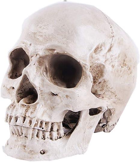 Menschliches Schädelmodell Für Anatomie Lebensgröße 1 1 Menschlicher Schädel Replikat Harz Medizinische Anatomische Verfolgung Lehren Skelett Statue Halloween Dekoration Amazon De Garten