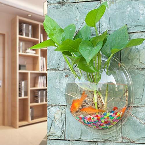Placehap - Jarrón hidropónico Redondo de Pared para Acuario, decoración del hogar, acuarios, peceras: Amazon.es: Hogar