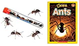 Nature Gift Store Live Ant Farm Ants (1 Tube of Ants) Plus Ant Book- Bundle