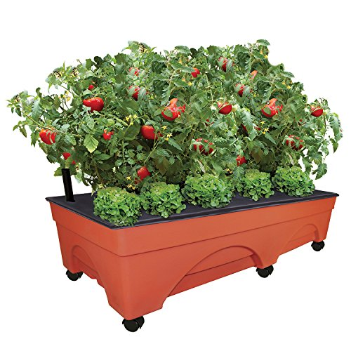 "Emsco Group Big City Picker Raised Bed Grow Box – Self Watering and Improved Aeration – Mobile Unit with Casters – Extra Large 48"" x 20"" Design Large System Box"