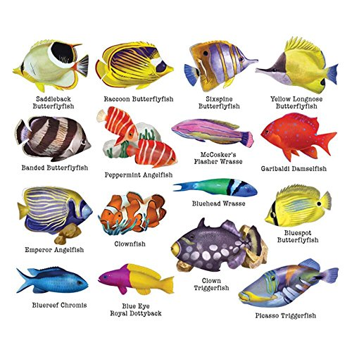 Lafayette Reef Fish II Multi Shaped Puzzles 500 Piece Collage Jigsaw Puzzle 0079ZZ