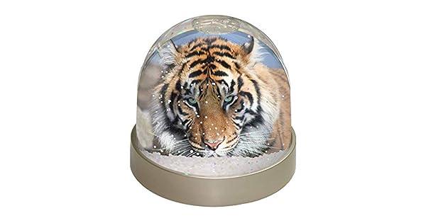 Amazon.com: Tigre de Bengala Foto Globo de nieve Waterball ...