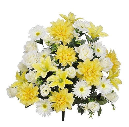 gerbera daisy bush - 9