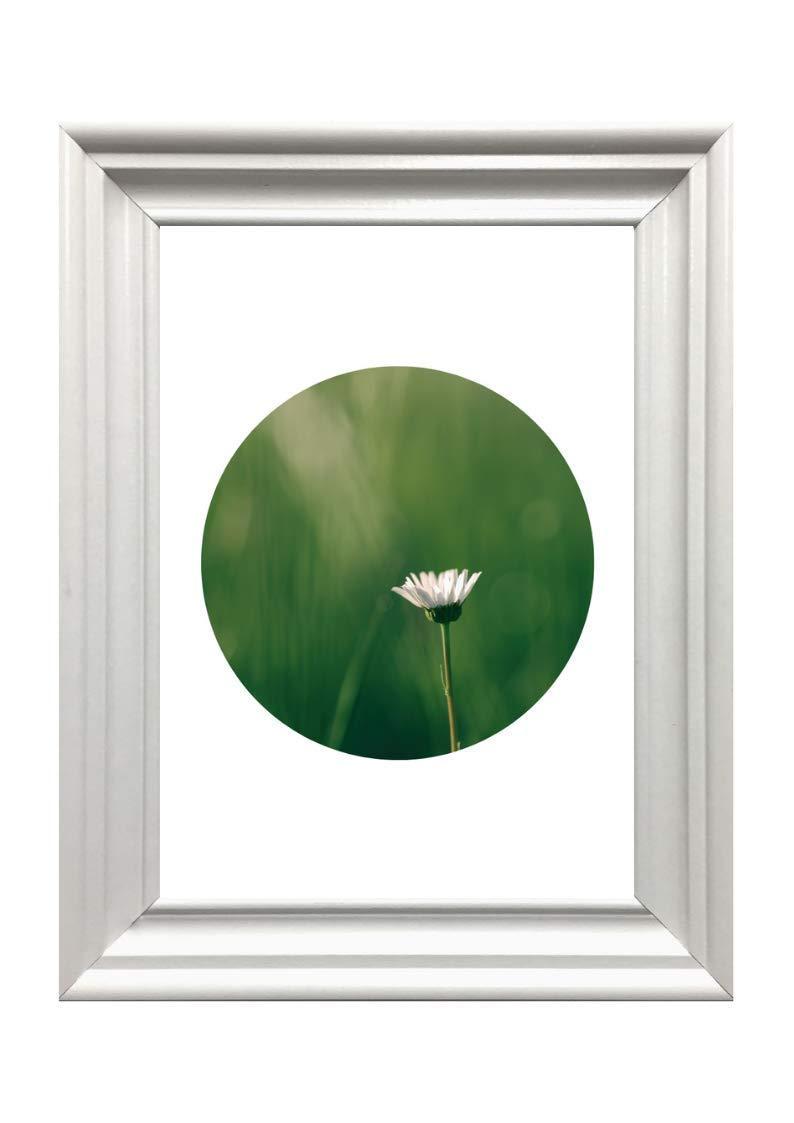 Din A4 Kunstdruck ungerahmt Kreis Scandi Style Fotokunst Geschenk Druck Poster Bild Blume G/änsebl/ümchen Margerite Wiese Gras