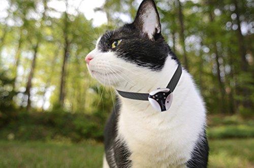 Eyenimal Cat Videocam