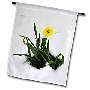 Florene Flower - Beautiful White Daffidil In Ice - 18 x 27 inch Garden Flag (fl_56891_2)