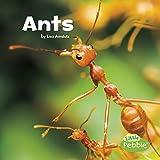 Ants (Little Critters)