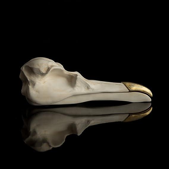 aa2785922 Amazon.com: SUCK UK Jewelry Organizer | Bird Skull Box | White & Gold |  Room Decor | Novelty Gifts |, White: Home & Kitchen