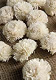 Richland Sola Flowers Gilly Flowers Set of 18