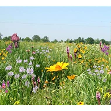 Tall Grass Meadow Mix (Mix 110), 500 Certified Pure Live Seed, True Native Seed