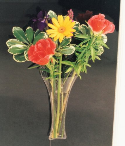 Gadjit VINYL Window Vase Trumpet Style Flexible Vinyl Vase -- Attaches to Windows, Mirrors, or other Non-Porous Surfaces with Suction Cups Vase Holds a Bouquet of Flowers, Water, Greenery (Vinyl Vase)