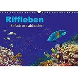 Riffleben - Einfach mal abtauchen (Wandkalender 2018 DIN A3 quer): Eintauchen in die bunte Unterwasserwelt (Monatskalender, 14 Seiten ) (CALVENDO Natur)