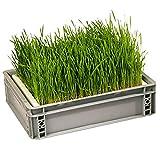 Eschenfelder Sprouting Box Wheat Grass Grain Large 15,74 x 23,6 inches (40 x 60 cm)