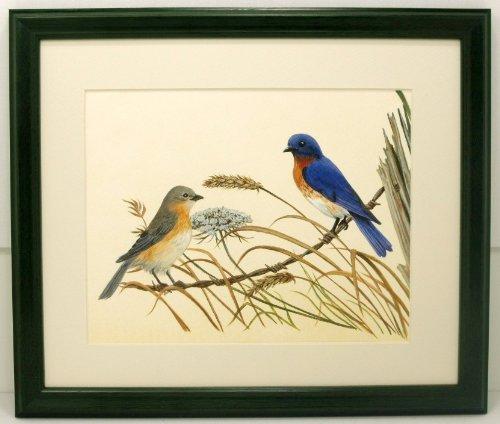 Audubon Bluebird Bird Print 10 X 12 Wildlife Wall (Audubon Birds Stained Glass)
