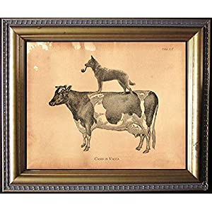 Australian Cattle Dog Riding Cow Vintage Collage Print Tea Stained dog art dog gift for dog mom gift for her dog novelty gift wall decor matte art print 1