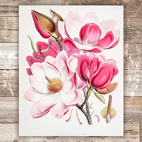 (Pink Magnolia Art Print - Unframed - 8x10   Botanical Prints Wall Art)