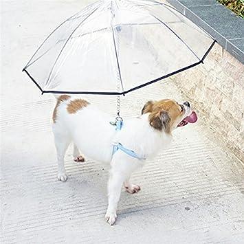 Paraguas de perro para mascota, extraíble y transparente, paraguas con correa, mantiene a