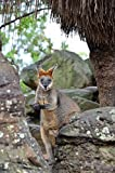 Kangaroo offers