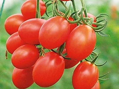 60+Grape Tomato Seeds - Plant home