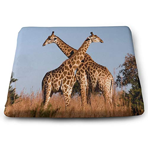 YETSH Chair Pads Square 16 x 16 Inch Giraffe Ithala KZN South Africa Memory Foam Seat Cushion Seat Pads for Office/Car/Dining Chair (South Patio Africa Ideas Garden)