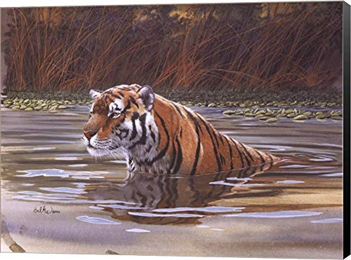 - Bengal Tiger by Don Balke Canvas Art Wall Picture, Museum Wrapped with Black Sides, 16 x 12 inches
