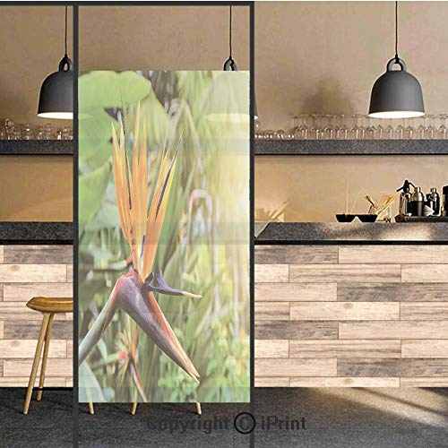 3D Decorative Privacy Window Films,Close up Image of Strelitzia Reginae Bird of Paradise Flower Madeira Island Portugal Decorative,No-Glue Self Static Cling Glass film for Home Bedroom Bathroom Kitche