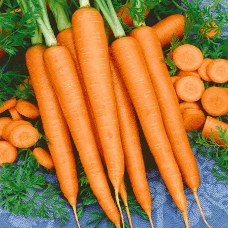 Scarlet Nantes Carrot Seeds For Planting 100 Seeds Grow Your Own Vegetables Tasty Carrots Garden Outdoor
