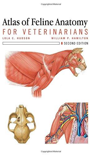 Atlas of Feline Anatomy For Veterinarians (Chart Anatomy Feline)