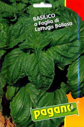pagano-1393-basil-basilico-lettuce-leaf-seed-packet