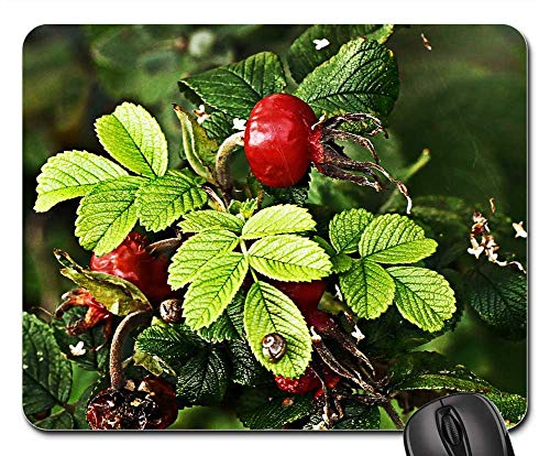 (Mouse Pad - Rose Hip Vitamin Plant Rose Health Medical Fruit)