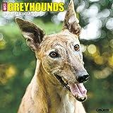 Just Greyhounds 2017 Wall Calendar (Dog Breed Calendars)