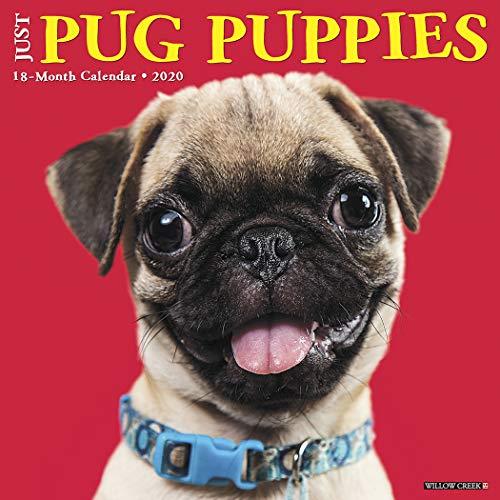 - Just Pug Puppies 2020 Wall Calendar (Dog Breed Calendar)