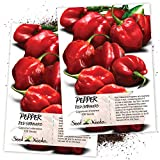 Seed Needs, Red Habanero Pepper (Capsicum chinense) Twin Pack of 100 Seeds Each Non-GMO
