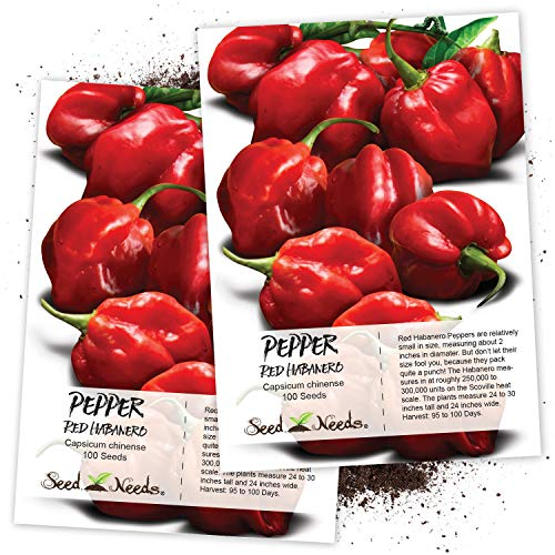 (Seed Needs, Red Habanero Pepper (Capsicum chinense) Twin Pack of 100 Seeds Each Non-GMO)
