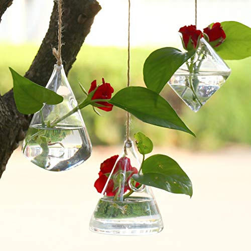 LLJEkieee Glass Planters Wall Hanging Planters Round Air Plant Pots Wall Plant Container Beautify and Purify Your House Or Office