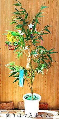 笹 1.5m ディスプレイ 高品質 七夕 人工観葉植物 B0198IKUGI