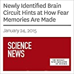 Newly Identified Brain Circuit Hints at How Fear Memories Are Made | Ashley Yeager