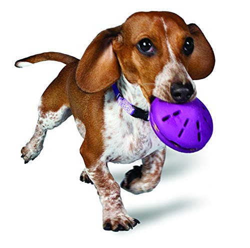 PetSafe Busy Buddy Twist 'n Treat, Treat Dispensing Dog Toy, Small