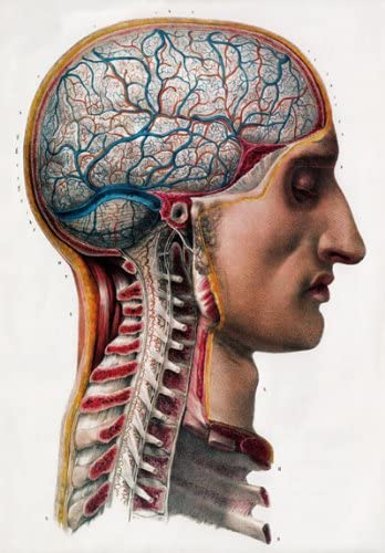 ML02 Vintage 1800/'s Medical Surgical Human Brain Head Poster Re-Print A4