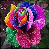 HuaYang 200PCS Arc en ciel Rose fleurs Jardin Multicolor Graines rares